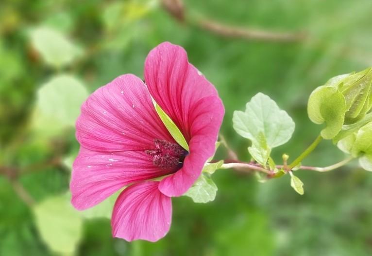 28회 <해로>의 꽃, 자원봉사자